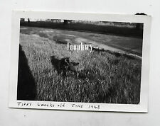 Beautiful Abstract Black CAT Named Tippy in Evocative LIGHT - Vtg Old PHOTO