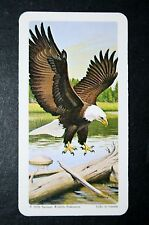 Bald Eagle   Iconic North American Raptor  Superbly Illustrated Card   VGC