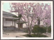 VINTAGE PHOTOGRAPH 1920'S TOKYO JAPAN CHERRY TREE BLOSSOMS HOUSES OLD PHOTO