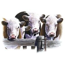 CATTLE - HEREFORD COWS 3 HEADS on One 16 Inch Square Fabric Panel To Sew