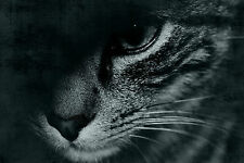 Framed Print-Black & White Cats Face Emerging from the Darkness (Picture Poster)