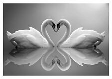 LOVE HEART SWANS - Stunning Animals Large Wall Art Canvas Picture 20 x 30""