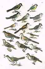 "Jonston - Merian Birds - ""SMALL BIRDS - PAGE 44"" - Hand-Colored Engraving -1657"
