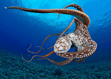 Stunning OCTOPUS - 3D Postcard Lenticular Greeting Card