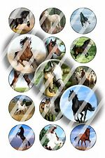 Pre-Cut Bottle Cap Images Horse Play Collage Sheet R135 - 1 Inch Circles