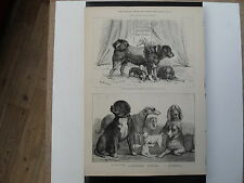 Brighton Dog Show - 2 engravings from the Illustrated Sporting & Dramatic News