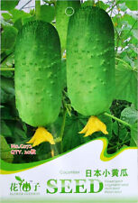 1 Pack 20 Cucumber Seeds Cucumis Sativus Gherkin Garden Vegetable C072