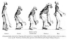 The Origin of the Species by Charles Darwin +audio