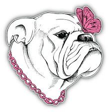 Bulldog Dog Girl Car Bumper Sticker Decal 5'' x 5''