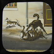 VICTORIAN TALE Glass Magic Lantern Slide J PLOUGHMAN NO19 C1890 DOGS FIGHTING