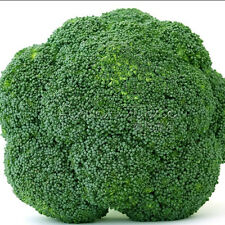 100 Healthy Broccoli Waltham Seeds With High Nutrients Growing Trouble-Free Gard