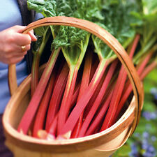 RHUBARB - GLASKINS PERPETUAL - FINEST SEEDS - NEW SAME DAY POST - UK - QUALITY S