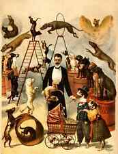 Circus Trained Dog Act 1899 A4 Photo Print