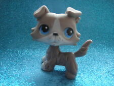 ORIGINAL Littlest Pet Shop Collie DOG # 67 , Shipping with Polish