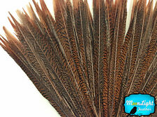 """10 Pieces - 12-14"""" Natural Golden Pheasant Tail Feathers"""