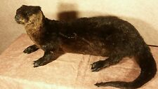 taxidermy river otter standing stuffed animal mount gift present cabin decor 2