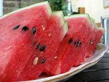FARM RAISED ORGANIC GOURMET PETITE RED WATERMELON SEEDS LOW S&H  ICEBOX MELON