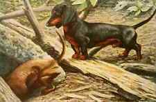 A4 Photo Fuertes Louis Agassiz 1919 Dachsund Print Poster