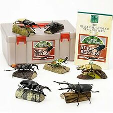 Stag Beetle PVC figure Set 7 kinds of Beetles In Box Colorata