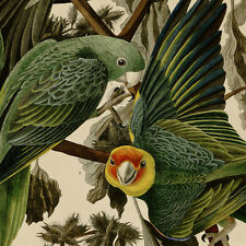 "Audubon 20""x30"" Fine Art Bird Print Vintage - Carolina Parrot"