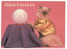 WHAT FUTURE? fortune-telling CAT Animal Tales POSTCARD BLACKPOOL ENGLAND pink
