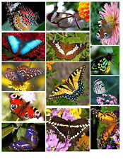 BUTTERFLY PHOTO-FRIDGE MAGNETS (13 IMAGES)