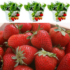 200PCS Four Seasons Strawberry Seed Potted Perennial Flower Fruit Seeds Balcony