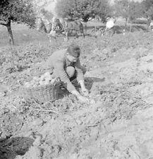 Michelfeld-Reichsarbeitsdienst-R.A.D.-2.WK-Erntehelfer-g-11