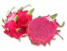PURPLE DRAGON FRUIT CACTUS Pitaya Seeds (5 seeds)  R-024