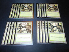 20x*Forest*SAME ART*Tempest Basic Land*FREE SHIPPING**Magic the Gathering MTG