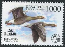 2009. Belarus. Bird of the year. Grey goose.