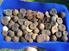 Group Of 70+ Florida Fossil Fossils Echinoid Echinoids Sea Urchin Sea Biscuit