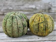 ZATTA MELON 20 SEEDS SAID TO HAVE BEEN GROWN BY THOMAS JEFFERSON IN 1774