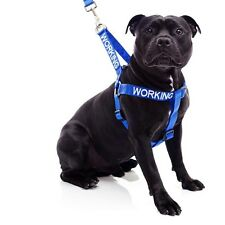 Working Strap Harness For Dogs - Free Shipping