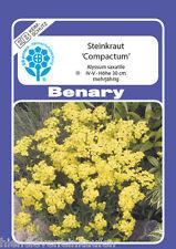Steinkraut gelb Alyssum saxatile Compactum mehrjährig 250 Pflanzen Benary Samen