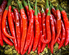 50+ FRESH Cayenne Pepper / Guinea Spice Seeds - Grown Organically 2016 seeds