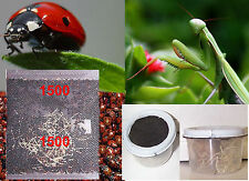 1500 Premium Fresh Live Ladybugs + 2 Praying Mantis Egg Cases and 2 Incubators