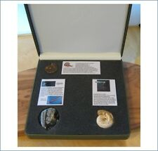 Real fossil ammonite set in gift case with info cards for dinosaur & nature fans