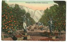 Oranges Snowfields California CA Orange Groves Occupational Work Related