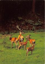 BF39206 cerf deer switzerland   stag animal animaux