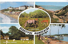 Hampshire Postcard - Beautiful Hampshire - Showing New Forest Ponies   XX555