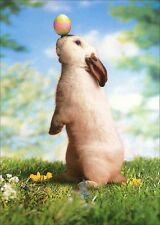Rabbit Balances Egg on Nose Easter Card - Greeting Card by Avanti Press