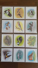 Cadbury 99 Flake Collectors Cards BIRDS IN SPRINGTIME - Set of 12 in sleeves