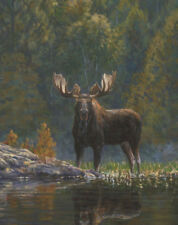 MOOSE ART PRINT - North Country Moose by Bruce Miller 20x16 Wildlife Poster