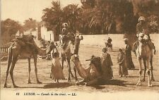 POST CARD AFRICA EGYPT EGYPTE LUXOR CAMELS IN THE STREET