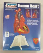 Lindberg 1/1 Life Size Human Heart Anatomy Model Kit New