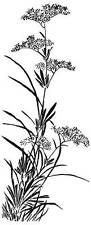 Sm Wildflower Unmounted Rubber Stamp - SA-7179