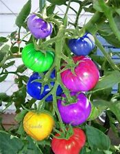 100 rainbow tomato seed beautiful ornamental potted organic vegetable seeds