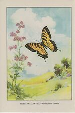 "1917 Vintage BUTTERFLIES ""TIGER SWALLOWTAIL"" BUTTERFLY WOW! COLOR ART Lithograph"
