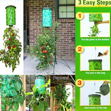 Tomato Upside Down Hanging Planter Plant Hang Tomatoes Grow Greening Planting